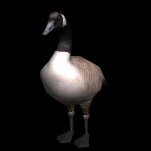 canadian goose 3d max