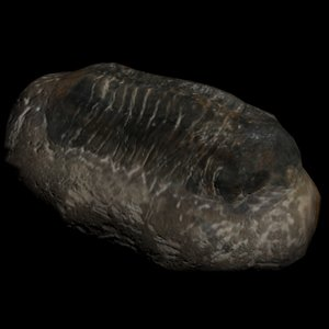 3d trilobite fossil digitalreflection