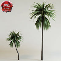 cordyline australis 3ds