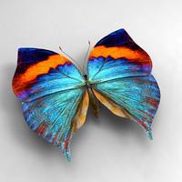 3d butterfly butt
