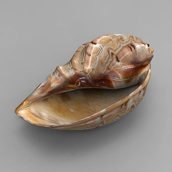 3ds seashell sea shell