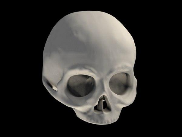 3d human skull model