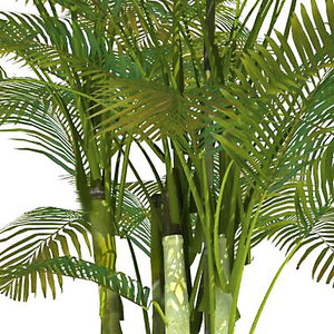 bamboo palm 3d 3ds