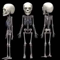 3dsmax 2years skeleton 2 years