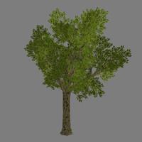 tree - 2 3d model