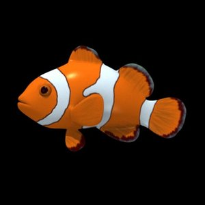 3d anemone fish anemonefish