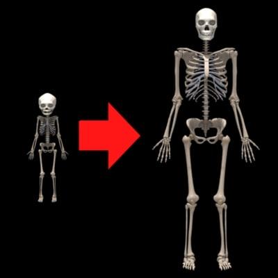 skeleton transformation 3d max