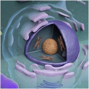 3d cell endoplasmic reticulum model
