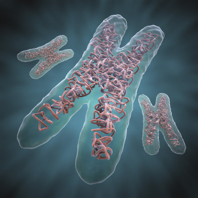 dna chromosome 3d model