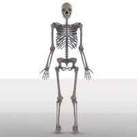 male skeleton.max