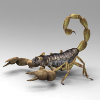 3d model of scorpion scorp scorpio