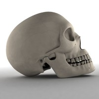 male skull max
