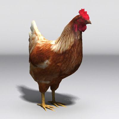 3d hen fowl model