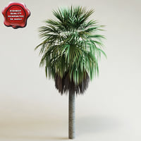 washingtonia robusta palm 3d model
