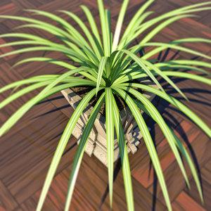 3d model decoratif plant chlorophytum houses