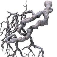 3d model roots
