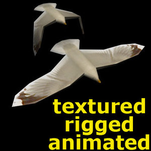 3d seagull sea model