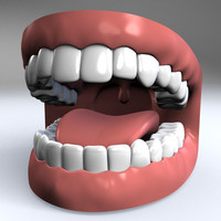 human mouth teeth gums 3ds