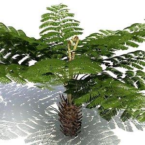 3d model tree fern