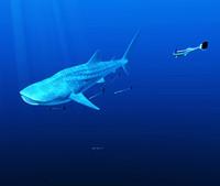 whale shark-V2