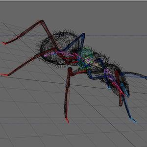 black ant lwo