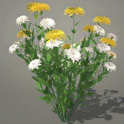 flowers chrysanthemums 3d model