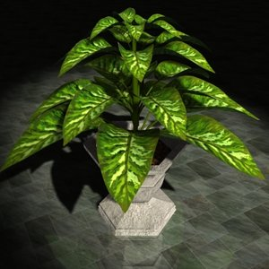 3d decoratif plant dieffenbachia house