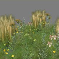 grassland plants - 1 3d max
