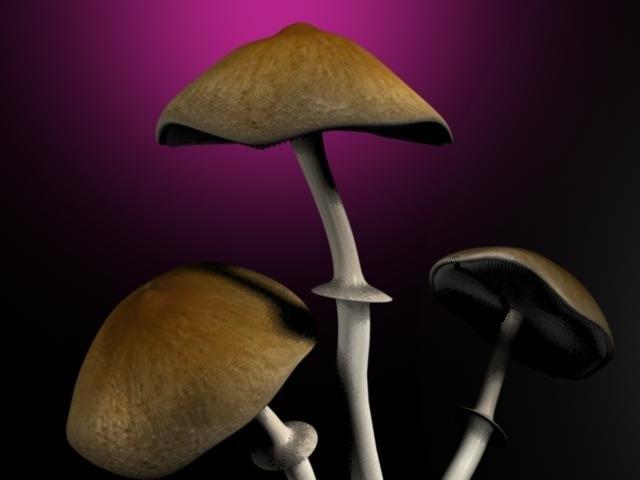 mushroom! mushroom 3d obj