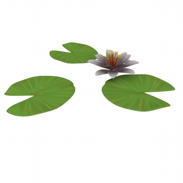 3d water lily model