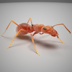 red ant lwo