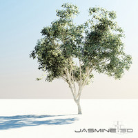 High Poly Tree (Pimienta Dioica)