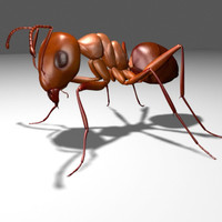 maya ant