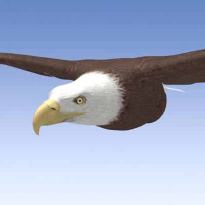 3d model of bald eagle