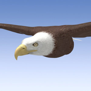 3d model of bald eagle