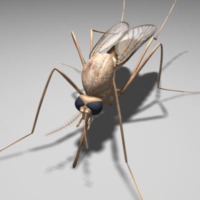 mosquito insect 3d model