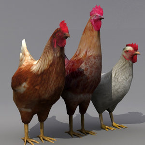 3ds max rooster hens