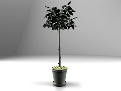 potted tree realistic 3d ma
