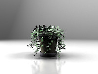 maya green vine plant