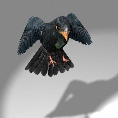 lightwave cute songbird blackbird bird flying