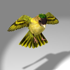 lwo cute songbird siskin bird flying