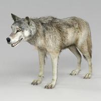 (s) Wolf