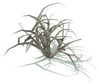 Thorny Bush