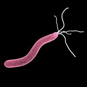 3d helicobacter pylori model