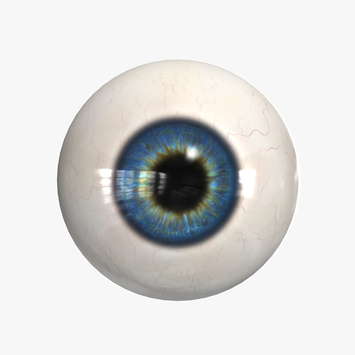eye eyeball max