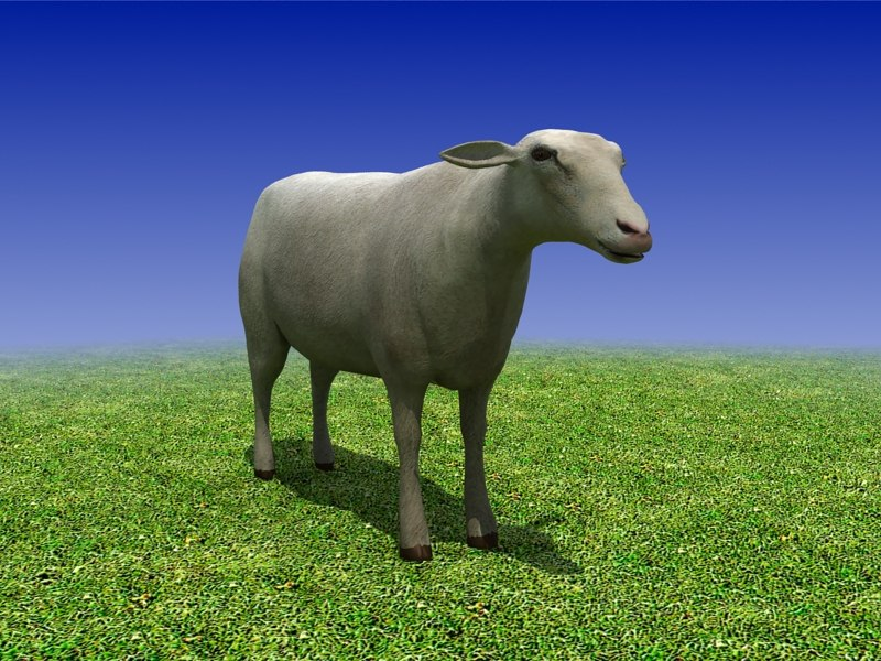 3d sheep cow bull model