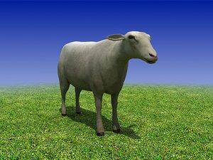 3d sheep cow bull model