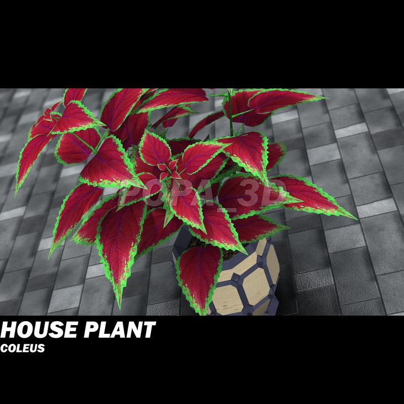 decorative plant coleus house 3ds