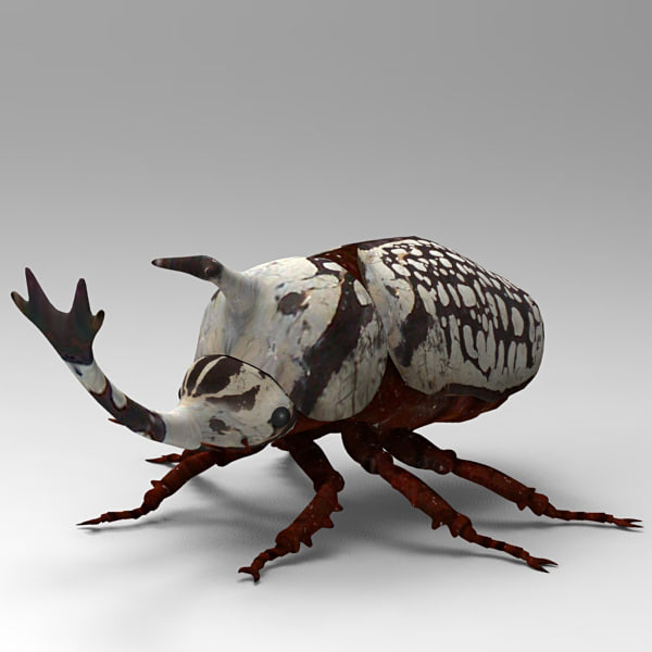 3ds max beetle