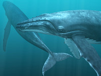 obj humpback whale
